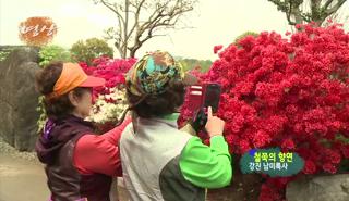 전남의 아름다운 영상-철쭉의 향연 대표이미지