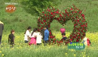 전남의 아름다운 영상-영산강변 유채꽃 대표이미지