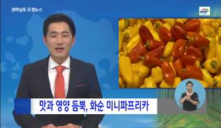 최근동영상-작지만, 맛과 영양 듬뿍 화순 미니 파프리카 대표이미지
